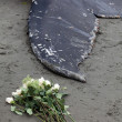 Humpback whale washes ashore and died - Stock Photo