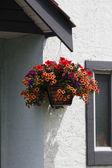 Hanging Flower Basket — Stock Photo