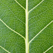 Leaf texture. - Stock Photo