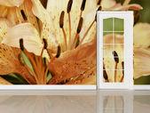 ドアと創造的な壁紙 — ストック写真