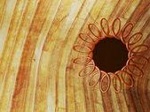 Rund gammal ram på trä — Stockfoto
