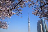 Tokyo sky tree and cherry blossom — Stock Photo