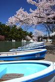 Cherry tree and pond — Stock Photo