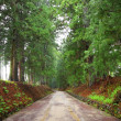 Cedar avenue of Nikko — Stock Photo