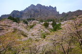 Cherry tree and craggy mountain — Stock Photo