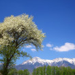 Tree of Malus Sieboldii and Mt. Yatsugatake — Stock Photo