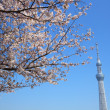 Tokyo sky tree and cherry blossom - Stock Photo