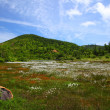Cotton grass and mountain - Stock Photo