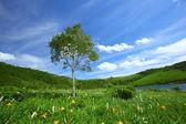 день lily и дерево — Стоковое фото