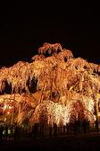 Cerejeira iluminada em fukushima, japão — Foto Stock