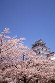 会津若松城と桜の花 — ストック写真