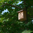 Bird House on a tree — Stock Photo #11413804