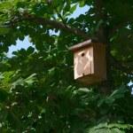 Bird House on a tree — Stock Photo
