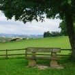 Green park with a bench — Stock Photo