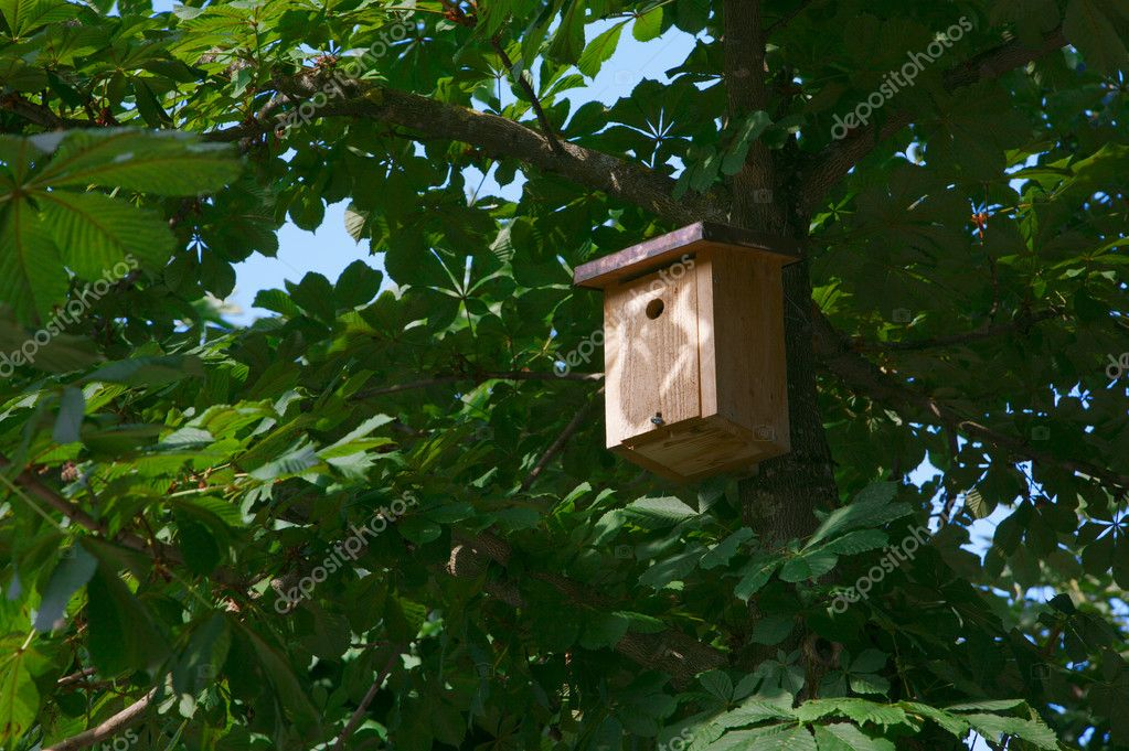Bird House on a green chestnut tree — Stock Photo #11413804