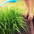 Muddy feet with red nails, woman watering plants - Foto Stock