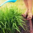 Muddy feet with red nails, woman watering plants - Stockfoto