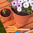 Spring in the garden, potting flowers - 