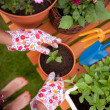 Stock Photo: Spring in the garden, potting flowers