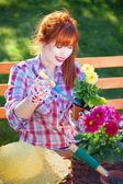 Concepto de jardinería, macetas de flores — Foto de Stock