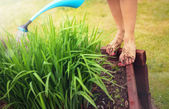 Muddy feet with red nails, woman watering plants — Stock Photo