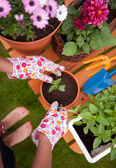 Spring in the garden, potting flowers — Foto Stock