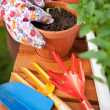 Spring in the garden, potting flowers — Stock Photo