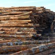 Stock Photo: Lumber ready for export, Coos Bay Oregon.