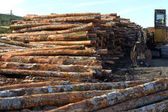 Lumber ready for export, Coos Bay Oregon. — Stock Photo
