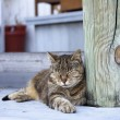 Stock Photo: Outdoor Cat