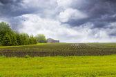 Farm with stormy sky — Stock Photo