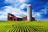 American Farm — Stock Photo