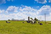 Fazenda de leite — Fotografia Stock