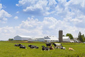 Milk Farm — Stock Photo