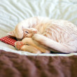 Sleeping Kitty with pillow — Stock Photo