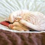 Sleeping Kitty with pillow — Stock Photo