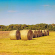 Stock Photo: Bundle of hay