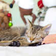 Kitty With Christmas Decoration — Stock Photo