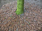 円錐形の芸術サークル — ストック写真