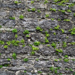 &amp;quot;Stone wall&amp;quot; - Stock Photo