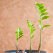 Three green sprout. Growth concept — Stock Photo