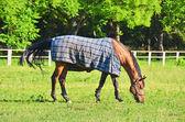 Horse in pasture — Stock Photo