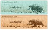 Hedgehog in the woods, illustration, vector — Stock Vector