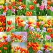 Tulip set - Stock Photo