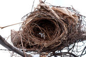 Old nest — Stock Photo