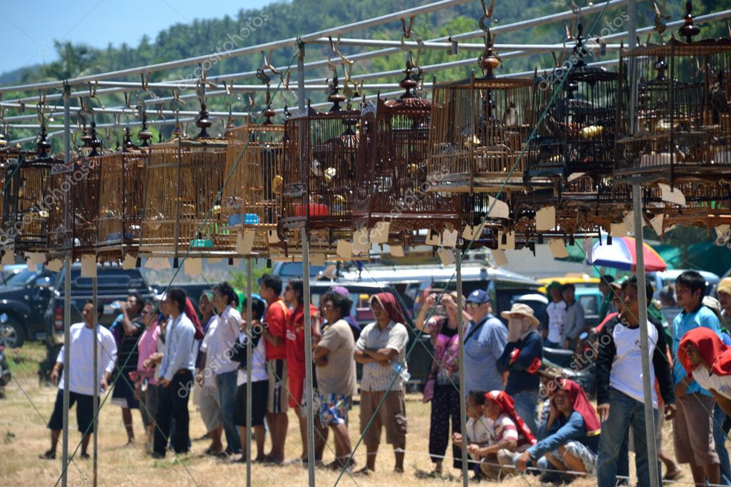 KO SAMUI,THAILAND - AUGUST 12, 2012: Row of bird caes with competitions during famous local birds sound contest on August 12, 2012 in Ko samui, Thailand — Stock Photo #12177428
