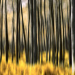 Abstract Forest - Lizenzfreies Foto