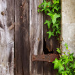 Royalty-Free Stock Photo: Old Door and Foliage