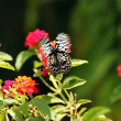Beautiful black and white spotted Papilio butterfly flying over — Stock Photo