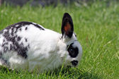 Beautiful rabbit — Stock Photo